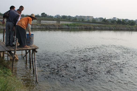 盛博山东淡水养殖客户